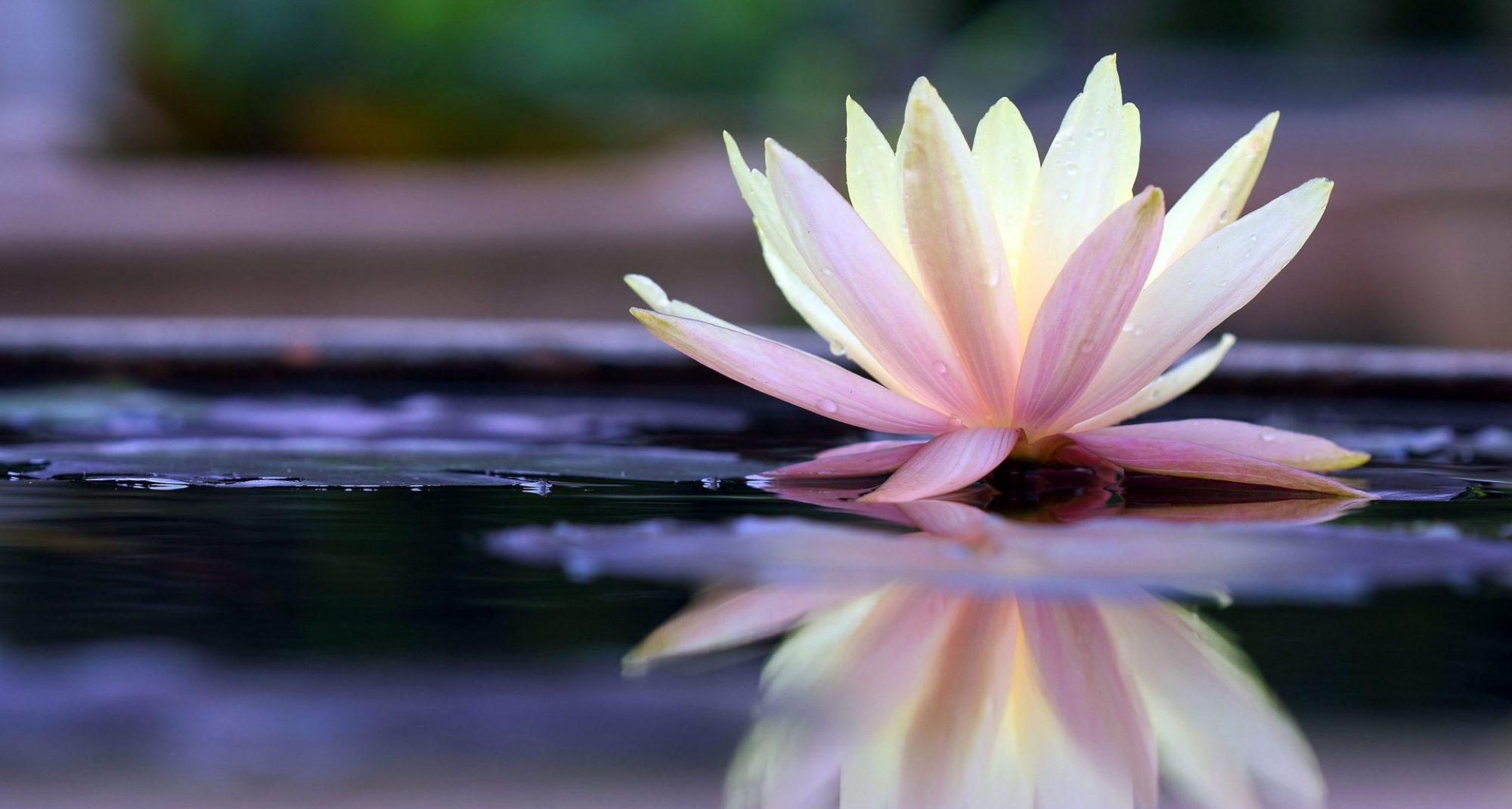 White Lotus Spiritual Healing